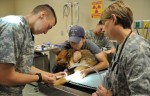 Military Veterinarian: Education and Career Information